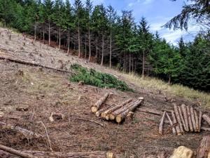 190922天使の森植樹地確認